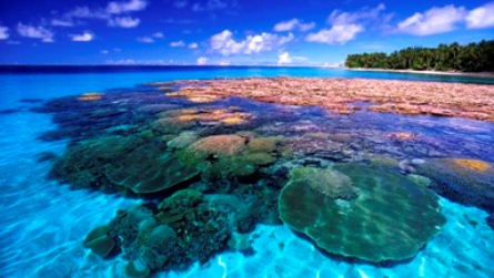 the environmental threats to coral reefs Threats to the reef find out more about some of the factors impacting our reef systems  one of the greatest threats to coral reefs today is global climate change.
