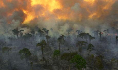 Rain Forest Global Warming